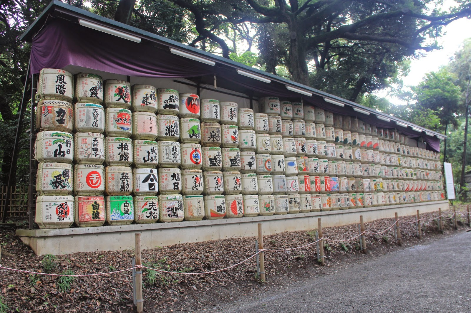 Tokyo Meiji Shrine, Shibuya,Odaiba