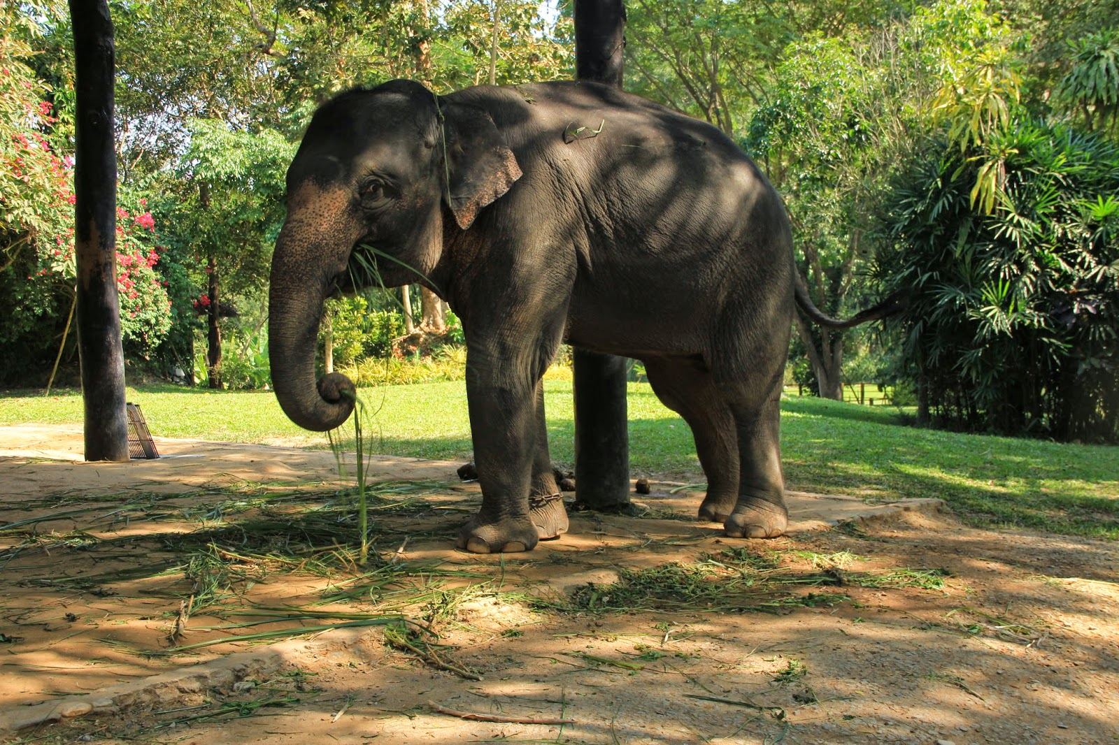 Christmas and Elephant Camp in Chiang Mai