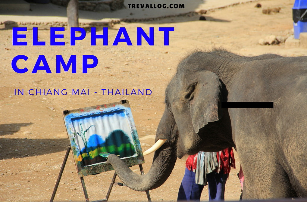 Elephant camp in Chiang Mai, Thailand