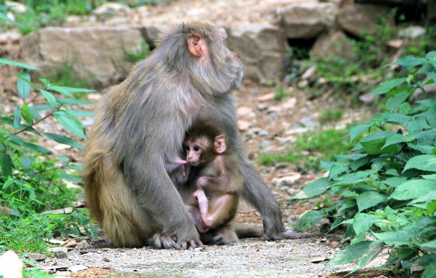 3 monkey feeding