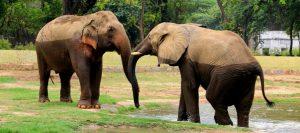 Back in New Delhi, Visiting National Zoological Park