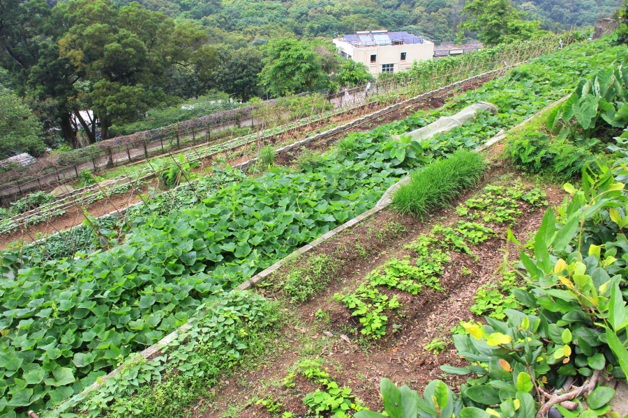 Planting of crops at Kadoorie Farm & Botanic Garden, Hong Kong