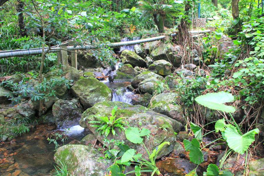 Small river at Kadoorie Farm & Botanic Garden, Hong Kong
