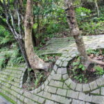 Slope protection at Peak Circle Walk, Hong Kong