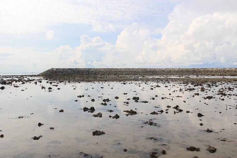 NParks Intertidal Guided Walk Sisters Island - May 2017