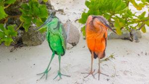 Should You Visit Maafushi Island in Maldives?