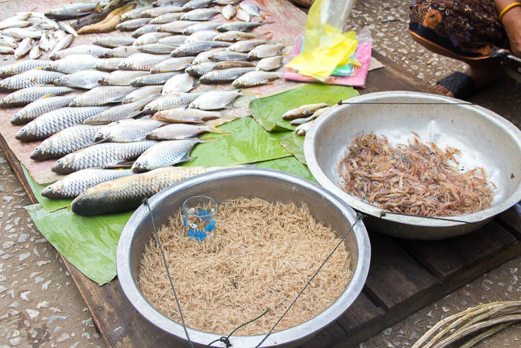 Luang Prabang Morning Market - raw fish and shrimps