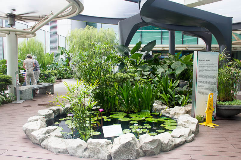 Things to Do in Changi Airport, Singapore - Terminal 1, Water Lily Garden
