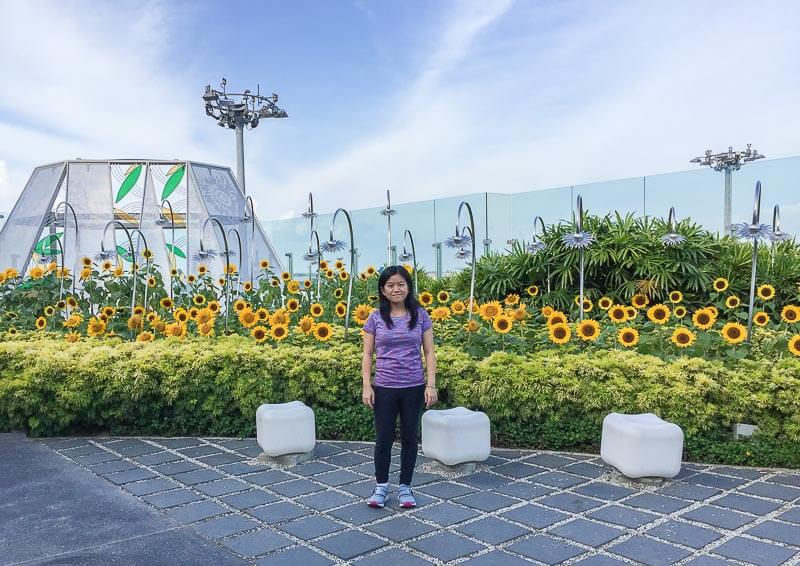Things to Do in Changi Airport, Singapore - Terminal 2, Sunflower Garden