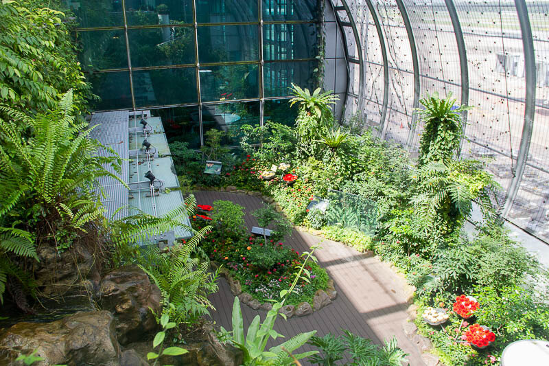 Things to Do in Changi Airport, Singapore - Terminal 3, Butterfly Garden 1