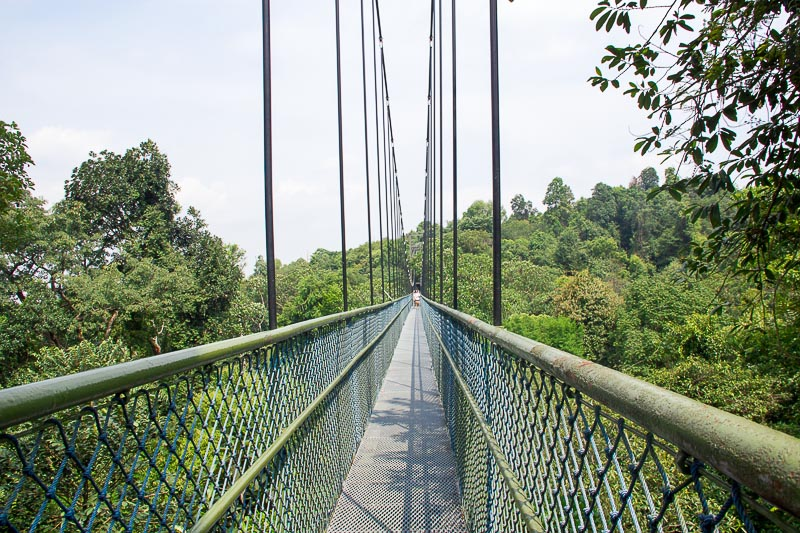 Places to Visit in Singapore for Outdoor Adventure Lovers - TreeTop Walk MacRitchie
