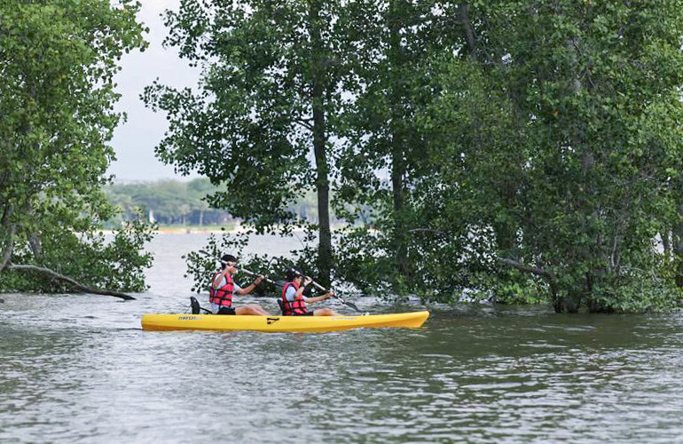 Pulau Ubin Kayaking