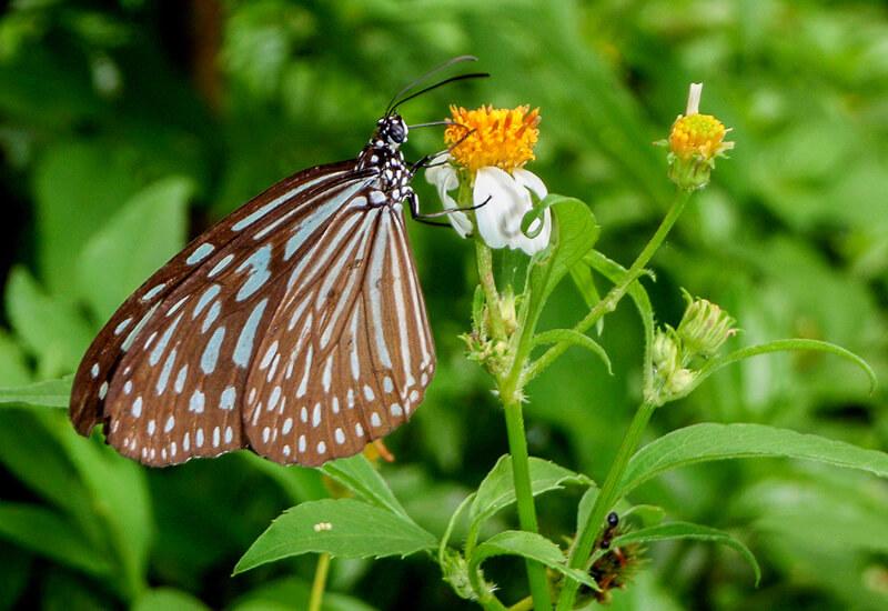 Ubin Butterfly Hills