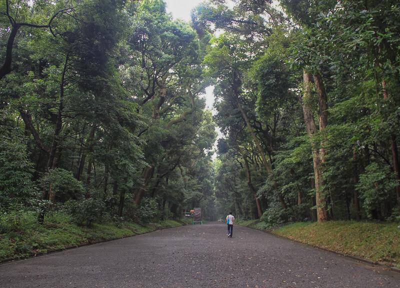 Long walk to Meiji Shrine, Tokyo, Japan
