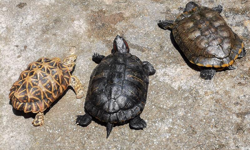 Kusu Island Singapore - things to do - tortoise shelter