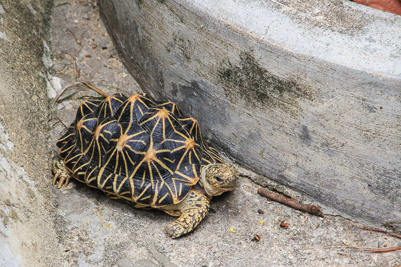 Kusu Island Singapore - things to do - tortoise sanctuary