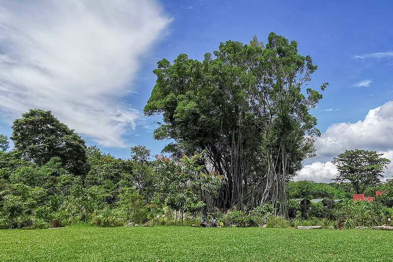 Sembawang Hot Sping Park - Banyan Tree