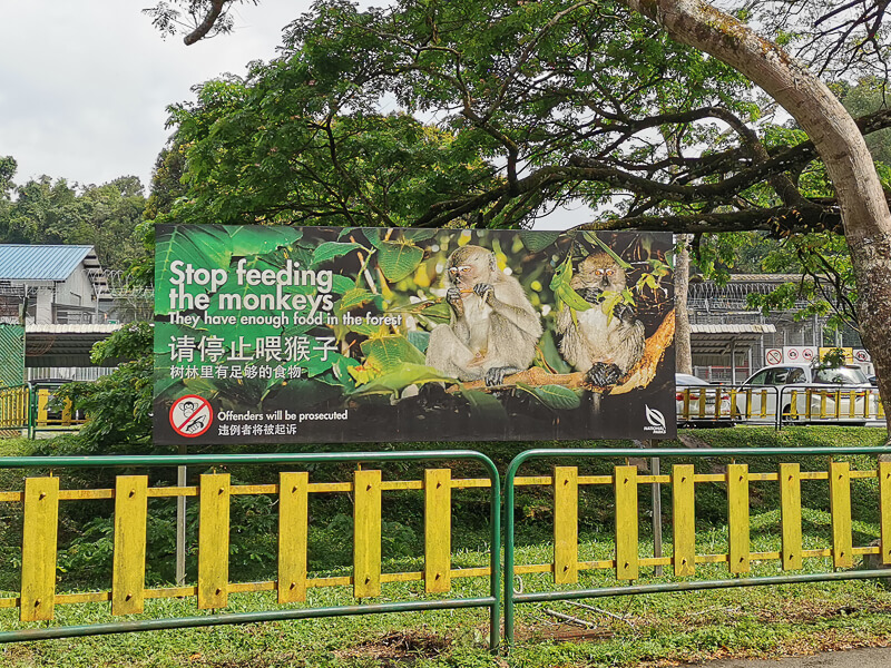 MacRitchie Reservoir - Don't feed the monkey