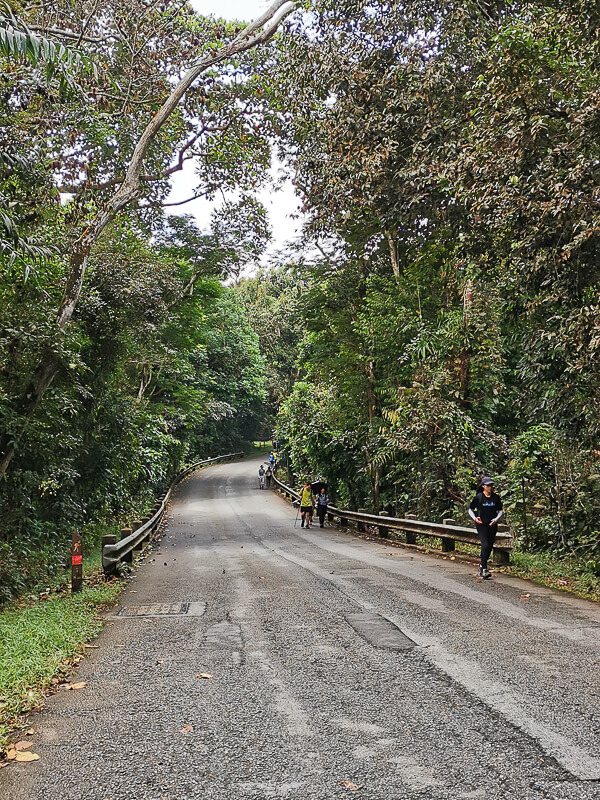 MacRitchie Reservoir - Suggested Route - MacRitchie Reservoir to Bukit Timah Nature Reserve - Rifle Range Road (3)