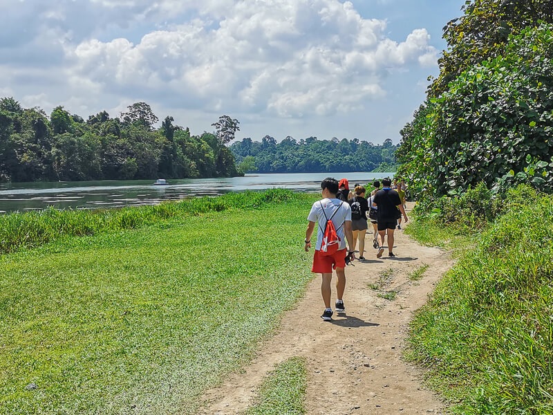 Things to do in MacRitchie Reservoir - 2a. Trekking or Hiking