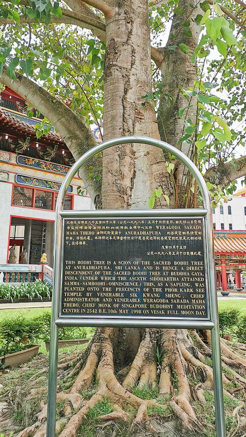 Kong Meng San Phor Kark See Singapore - Bodhi Tree
