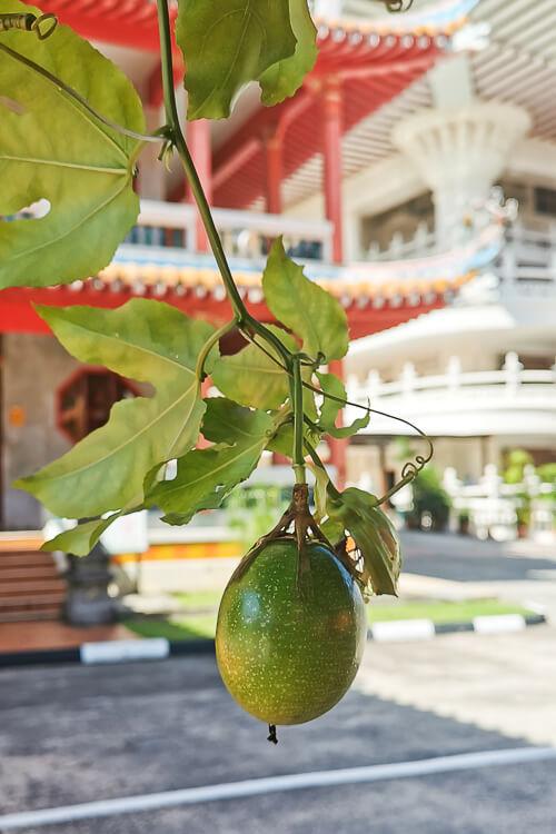 Kong Meng San Phor Kark See Singapore - Passionfruit